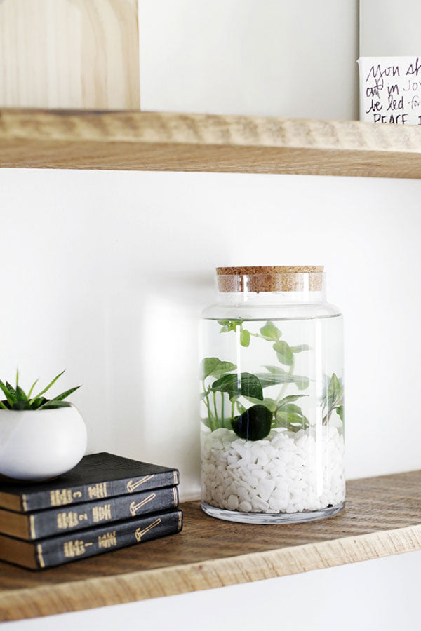 DIY Indoor Water Garden