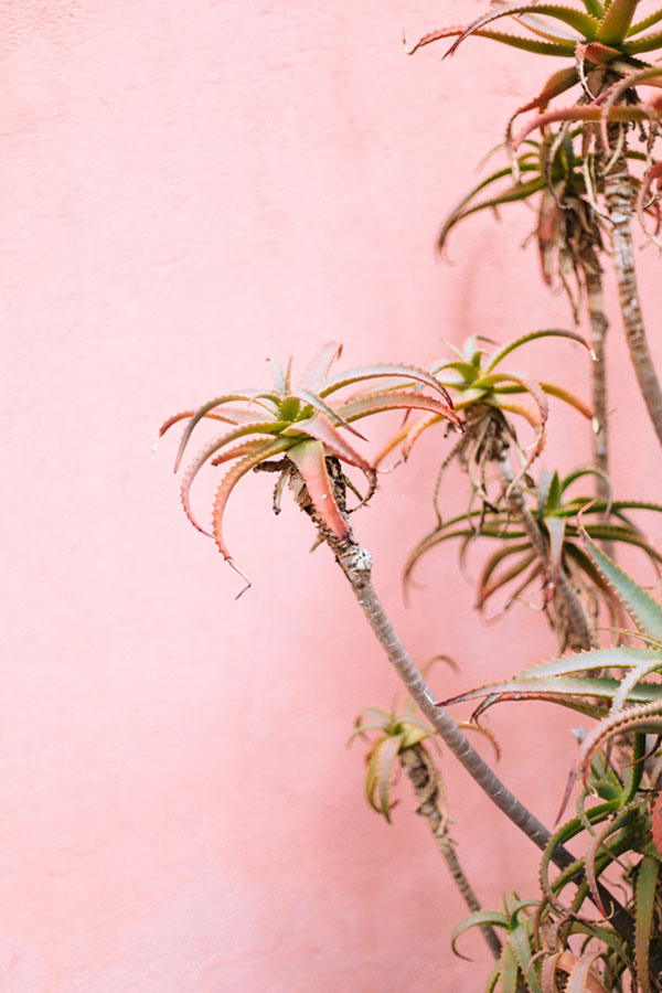 Pink Wall with Succulents in Mexico City