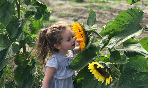 Little girl with smelling a sunflower