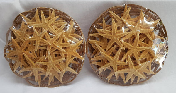 Basket of Orange Starfish (~50 pieces), Shells, - Shell Port