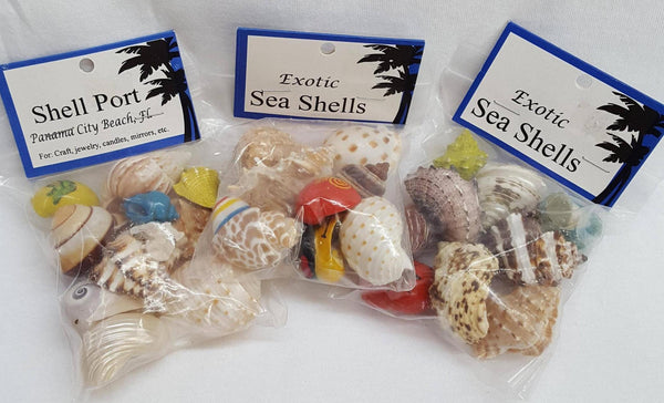Assorted Hermit Crab Shells/Homes, Gifts, - Shell Port