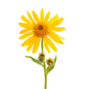 5 Minutes To Feeling Good With Arnica Natural Pain Relief Products