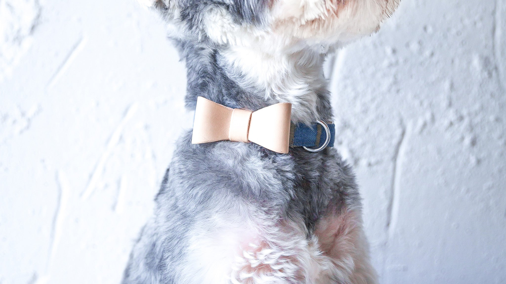 Harper Leather Bow Collar