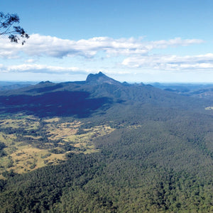 Wollumbin, The Warrior Chief & the Turkey