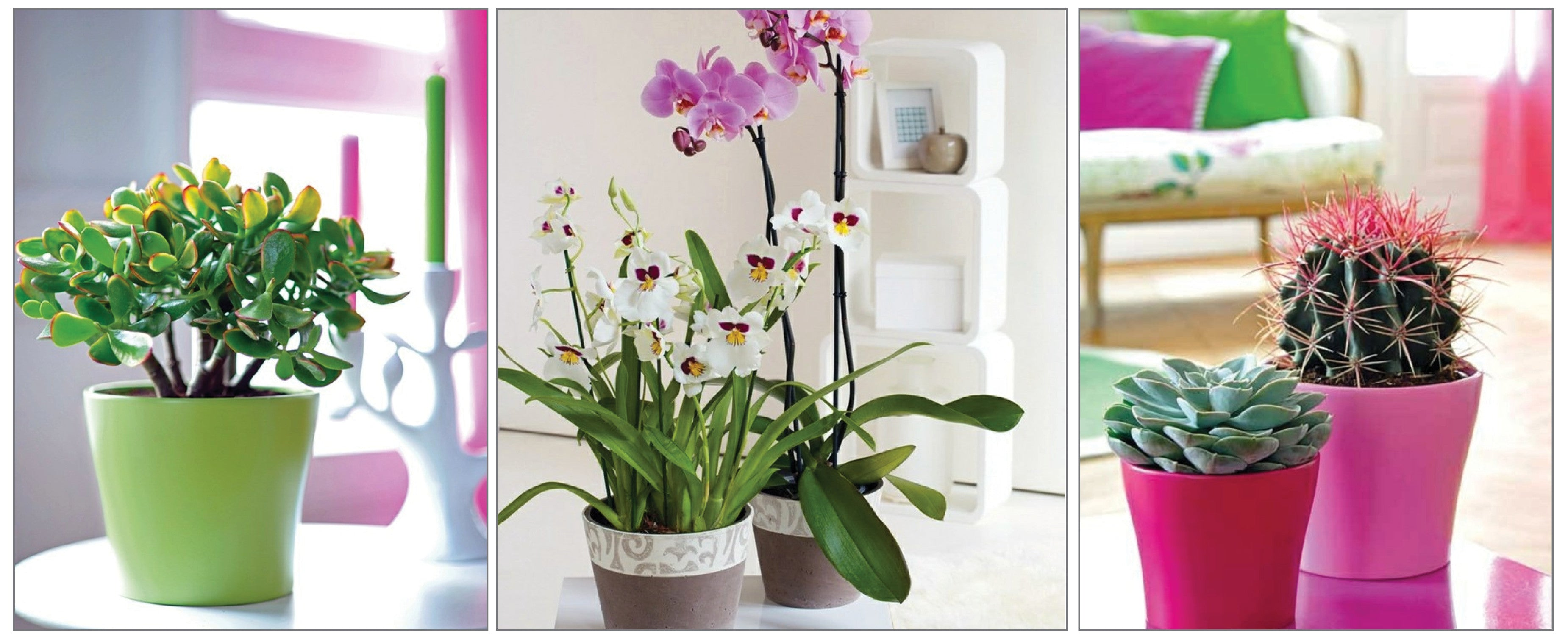 Create an Indoor Garden: If you've got green fingers, or simply can remember to water and feed them regularly, then the choice is endless and here are some beauties to inspire you.