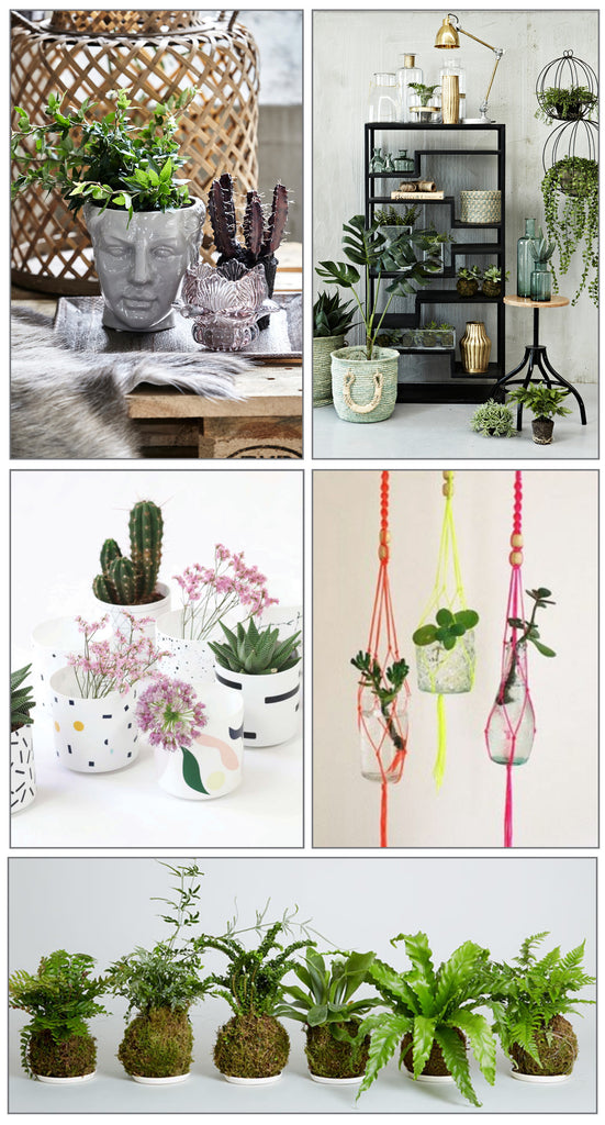Part of the joy of having indoor plants is the beautiful pot holders you can use. Choose from our range and think outside the box, using something that isn't your usual plant-pot to create a unique interior statement.  Embrace the trend for hanging plants with a retro 70s macrame hanging basket, or try your hand at the Japanese art of Kokedama to create beautiful hanging moss balls.