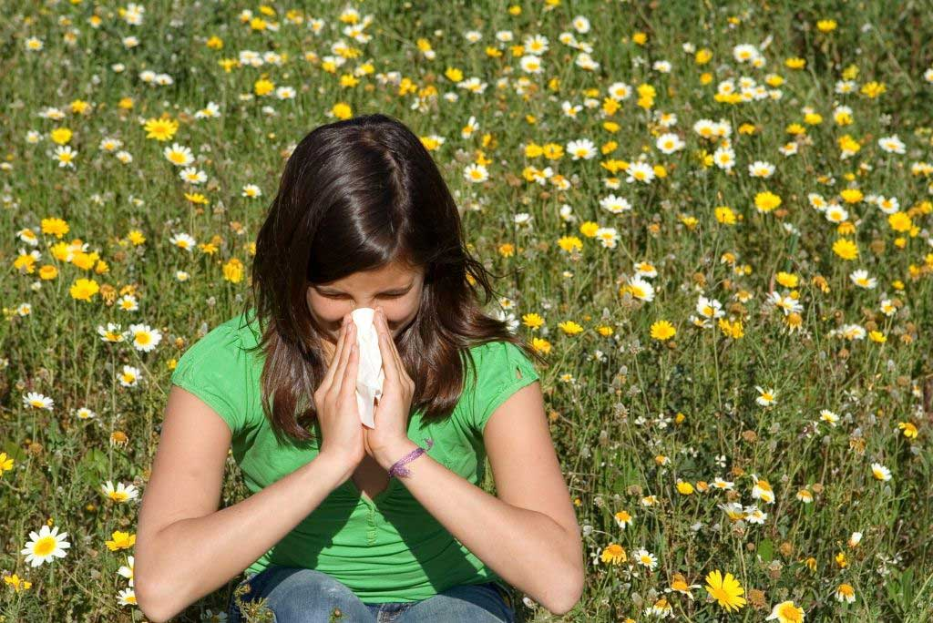 Can Matcha help with Hayfever Symtoms?