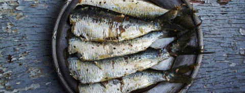 Sardines are a superfood