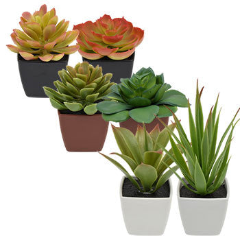 Artificial Potted Succulent Plants