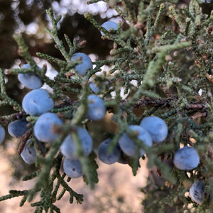 Ingredient Feature: Juniper Berry - Uncommonly Good