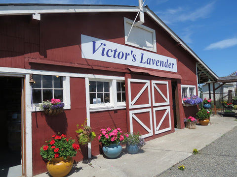 Meet our Local Supplier: Victor's Lavender - Mountain Girl