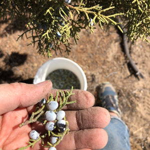 California Juniper Essential Oil