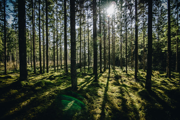Forest Bathing in Your Lunch Hour for Good Sleep