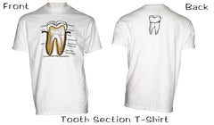 Tooth Sections T Shirts