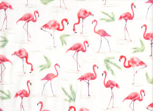 Close Up Flamingos