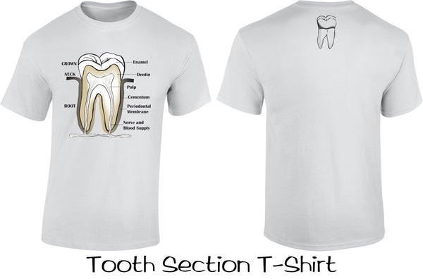 Tooth Section T Shirts
