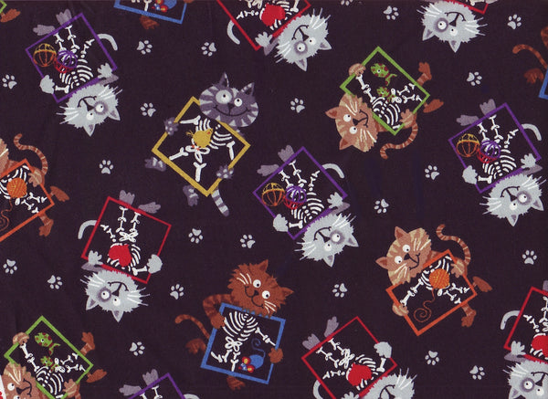 Close-up Stethoscopes Cover X Ray Cats 2