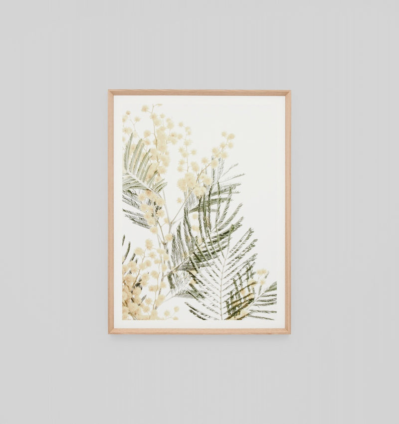 'Wattle Bloom 2' Framed Print