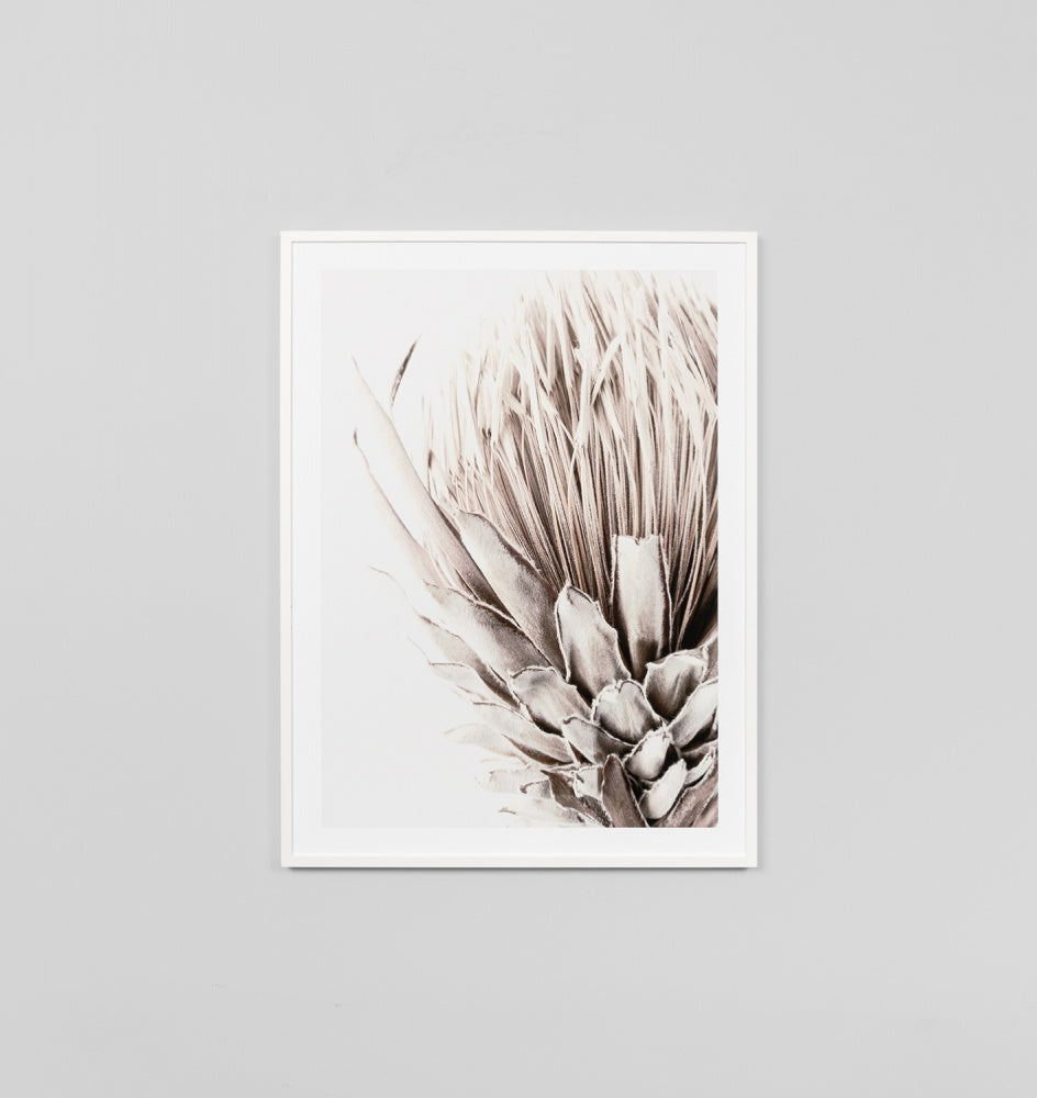 'Golden Protea' Framed Print