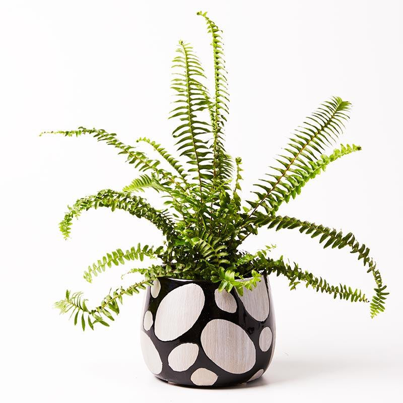 Grey and Black Spot Planter