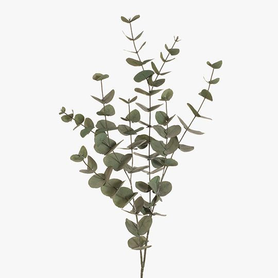 Eucalyptus Silver Dollar Tall - Forest Green
