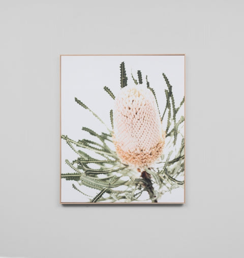 'Banksia' Framed Canvas