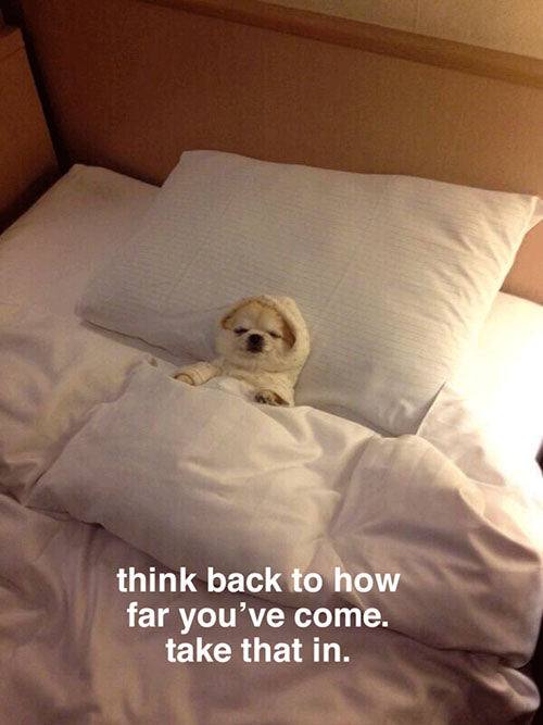 """We're Not Really Strangers dog laying in bed with overlay text reading """"think back to how far you've come. take that in."""""""