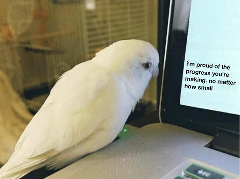 """A bird looking at the corner of a computer screen that says """" I'm proud of the progress you're making. no matter how small"""