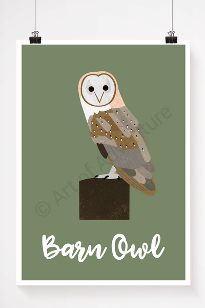 Barn Owl - Art of Adventure