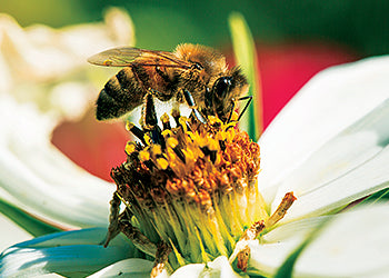 Save The Honey Bees - Good Stuff WE Do - Our Causes