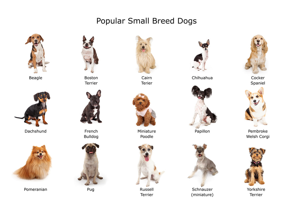 small breed dogs