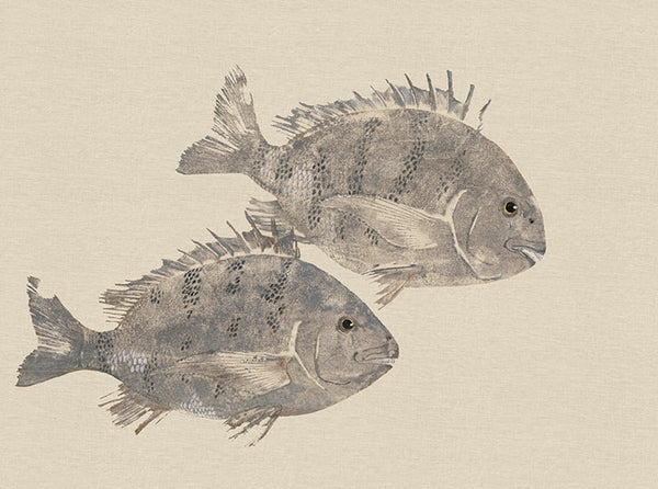 Two Sheepshead