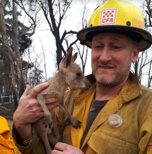 US firefighter rescues kangaroo in Australia