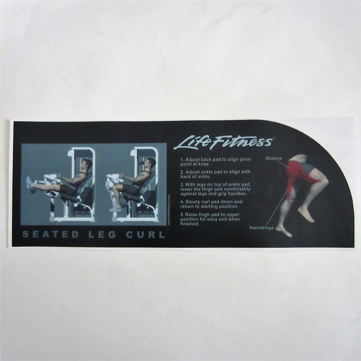 Pro 2 Seated Leg Curl