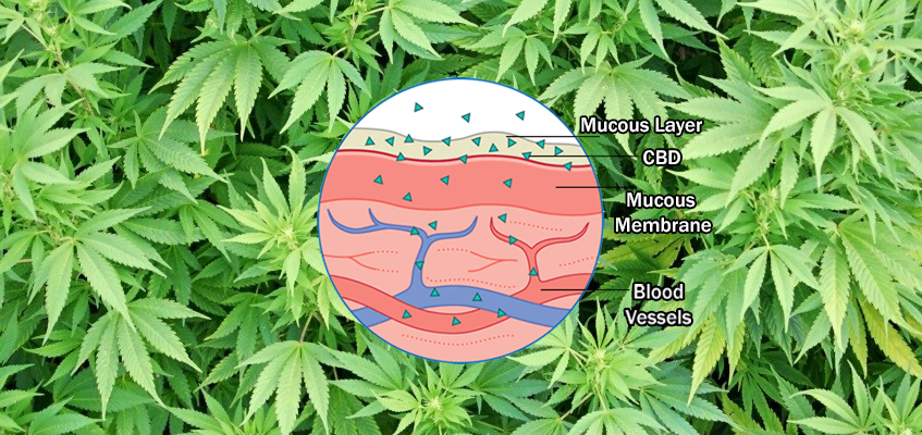 Sublingual CBD: What's the Point?