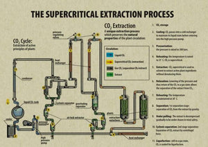 Methods of CBD Extraction