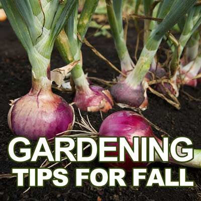 Gardening Tips for Fall