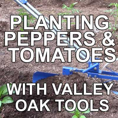 Planting Peppers and Tomatoes with Valley Oak Tools