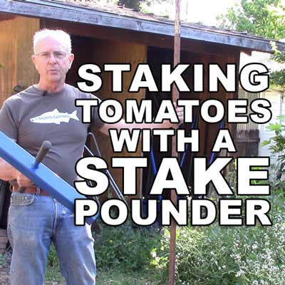 Staking Tomatoes with a Valley Oak Tools Stake Pounder