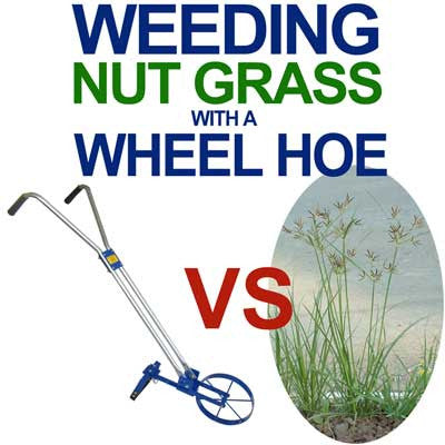 Weeding Nutgrass with a Wheel Hoe