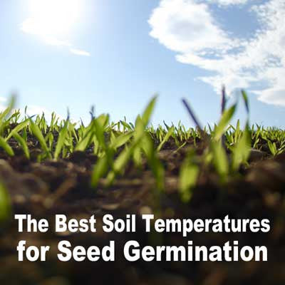 The Best Soil Temperatures for Seed Germination