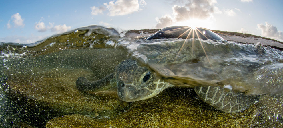 A Scientist Becomes a Photographer to Help Save Our Oceans