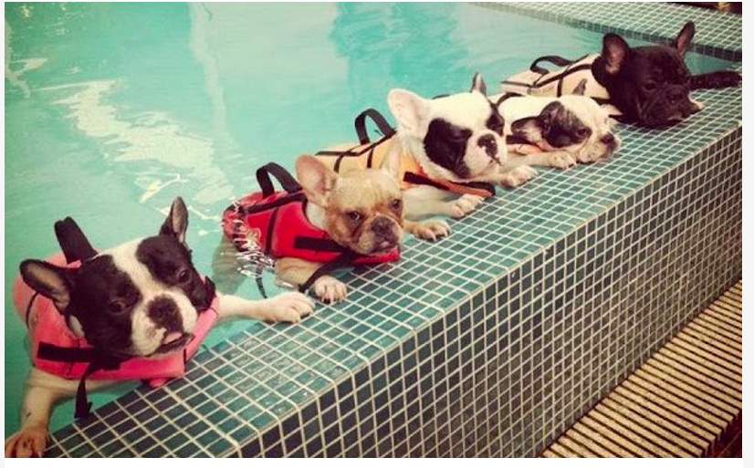 Water Safety Tips for Your Dogs