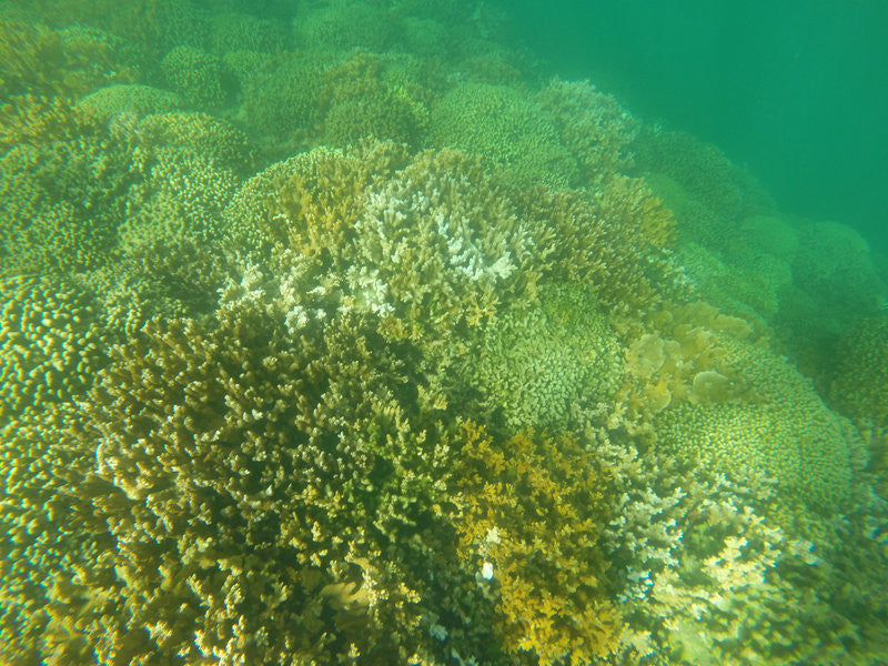 Chemicals In Sunscreen Are Harming Coral Reefs, Says New Study