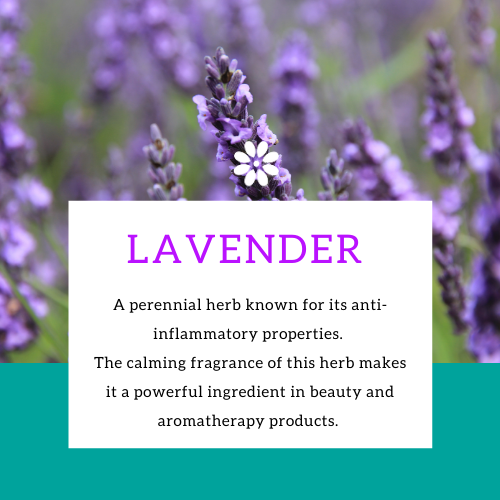 Organic Lavender Essential Oil - Aromatherapy