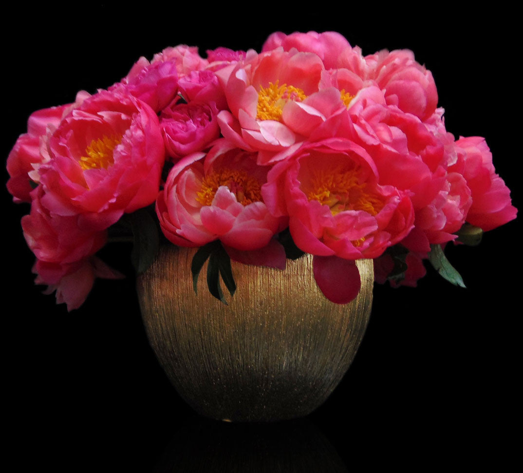 Luxurious Coral Peonies