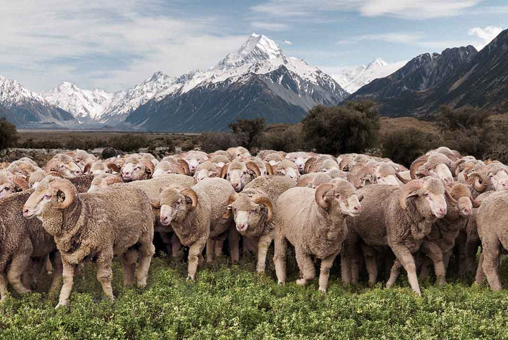 8 Reasons to invest in merino wool clothing.