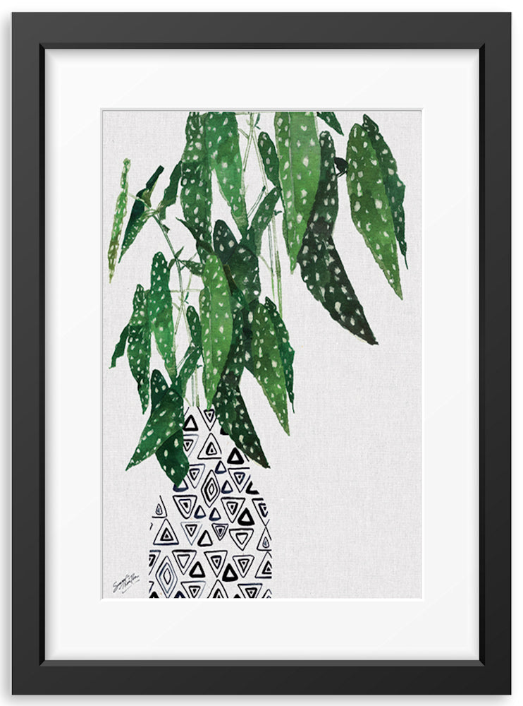 Summer Thornton | Polka Dot Begoina Plant