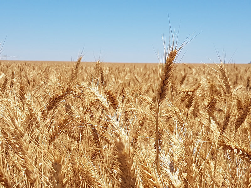 With The Grain: National Survey Providing Widespread Yield-gap Information