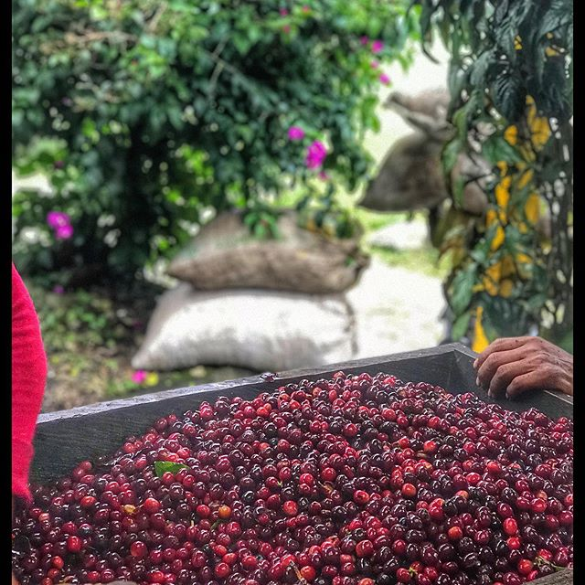 La Ventolera Coffee Farm Black Honey Colombia - Utterly Irresistible!